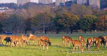 Dog causes deer stampede which left young lad with broken rib and head injury