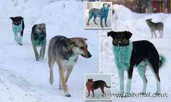 Dogs have turned blue, pink and now GREEN in Russia