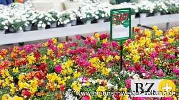 Corona: Frühlingserwachen nach Corona – Wo und wie Baumärkte öffnen