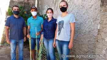 Emater/RS-Ascar distribui mudas de forrageiras em Cerro Largo - Agrolink