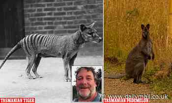 Australian man believes he has spotted a family of Tasmanian Tigers - but experts say its unlikely