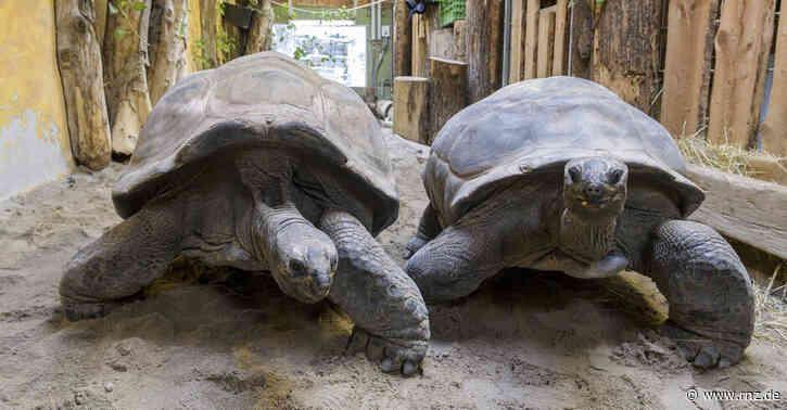 Tierisch spannend:  Riesenschildkröten haben über 100 Jahre auf dem Panzer