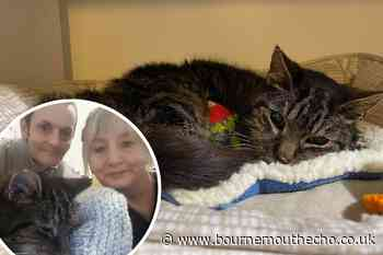 Mandy Prior reunited with missing cat Taz after 14 years