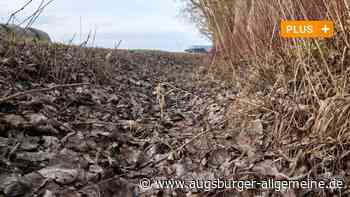 Wassermangel: Augsburger Schutzgebiet Höhgraben droht die Zerstörung - Augsburger Allgemeine