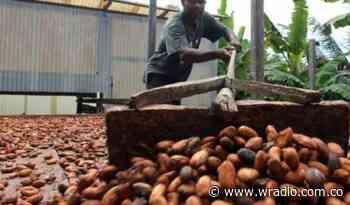 Tres cacaos de Santander preseleccionados para el salón de Chocolate de París - W Radio