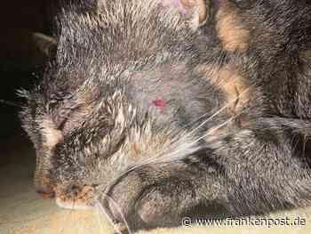 Bad Berneck/Waldershof: Tierquäler schießt Katze in den Kopf - Frankenpost