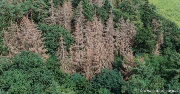 Zustand der Wälder so schlecht wie seit Jahren nicht mehr
