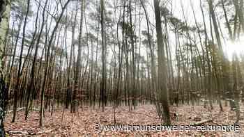 Zustand der Wälder ist so schlecht wie seit Jahren nicht mehr