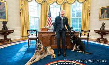 Joe Biden poses with dogs Major and Champ in the White House's Oval Office