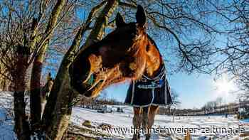 Unbekannte vergiften Pferd im Harz