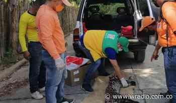 Otro tigrillo muerto en vías de Santander - W Radio