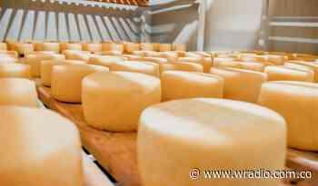 Así se reactivan campesinos y productores de queso Paipa en dos municipios de Boyacá - W Radio