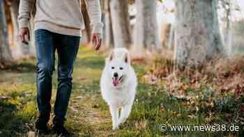 Wolfsburg: Hundebesitzer spaziert durch Wald – eine Sache ärgert ihn gewaltig - News38