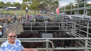 Record price of $4050 for cows and calves at Bega  Photos