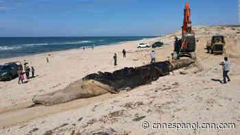 «Marea negra» de petróleo contamina las playas en Israel; hay peces, tortugas y hasta una ballena muerta - CNN