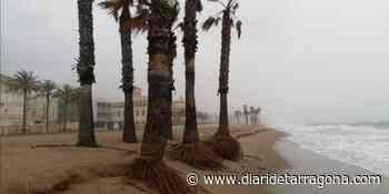 Retiran palmeras de playas de El Vendrell por el riesgo de caída - Diari de Tarragona