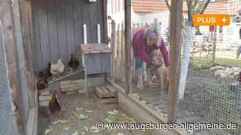 So lebt eine Augsburger Familie mit Hühnern als Haustieren