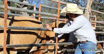 Siguiente entrada Avanza programa de vacunación de ganado en El Triunfo y San Antonio - El Informante Baja California Sur