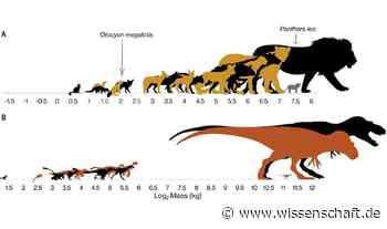 Dinosaurier Jungtiere begrenzten Raubsaurier-Vielfalt - wissenschaft.de
