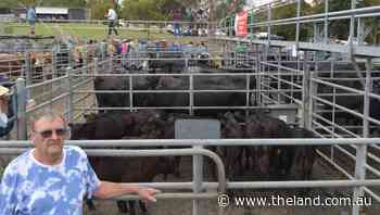 Record price of $4050 for cows with calves at Bega   Photos