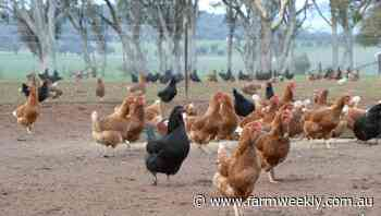 Australia regains bird flu freedom status