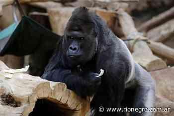 Animales del zoológico de Praga reportan casos de Coronavirus - Diario Río Negro