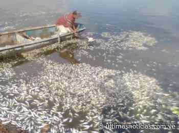 Cientos de peces aparecen muertos en la Laguna de Puerto Píritu - Últimas Noticias