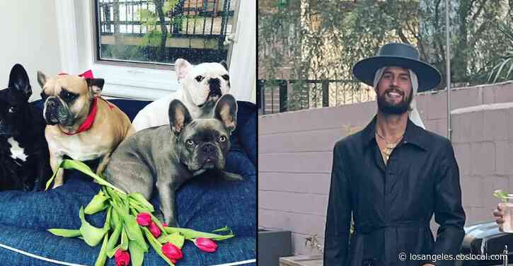 Lady Gaga's Dogwalker Shot By 2 Men In Hollywood; 2 French Bulldogs Stolen