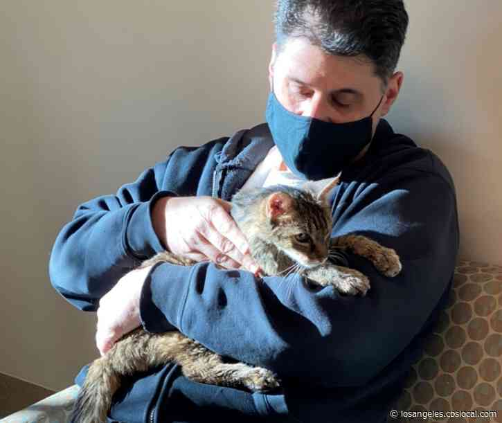 Cat Who Went Missing 15 Years Ago Found In Palmdale, Reunited With Owner