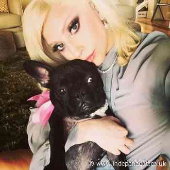Lady Gaga's dogs stolen after her dog-walker is shot four times in chest, report says