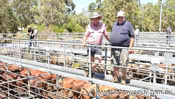 Beef steers sell to 650c/kg at Boyanup