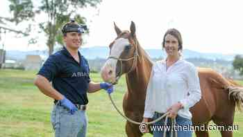 First crop of horse dentists graduate in Tamworth