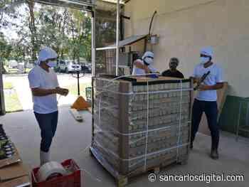 De Sarapiquí a España. 45 productores de palmito exportaron ya su tercer contenedor - San Carlos Digital