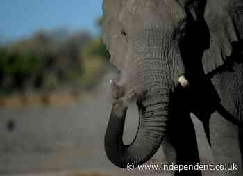 Elephant mother with calf kills zookeeper with a single strike from trunk