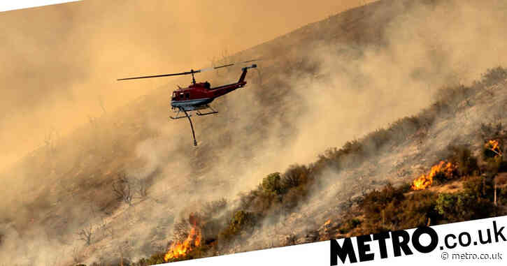 Forests' capacity to store carbon 'falling in regions with extreme annual fires'