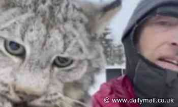 Canadian farmer picks up a lynx by the scruff of its neck and scolds it for killing his chickens