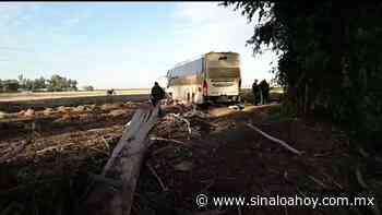Camión con destino a Los Mochis se accidente en carretera de Guamuchil. - Sinaloahoy