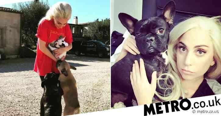Lady Gaga breaks silence after 'beloved' dogs stolen as she praises 'hero' Ryan Fischer: 'My heart is sick'