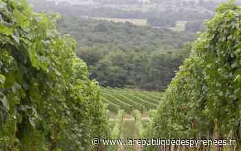 Monein : enquête pour trouver une main-d'œuvre viticole locale - La République des Pyrénées