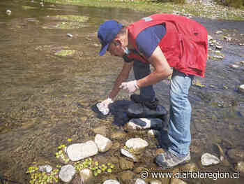 Análisis concluyen en que calidad del agua de Río Choapa es buena - http://www.diariolaregion.cl