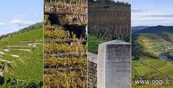 Francia e vino: 4 masterclass di Aspi alla scoperta di Rodano, Loira e Borgogna - OGGI