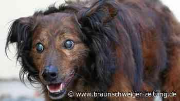Hund Freddy aus dem Peiner Tierheim sucht ein neues Zuhause