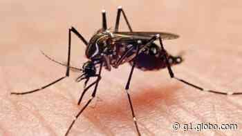 Cerquilho registra novos casos de dengue - G1