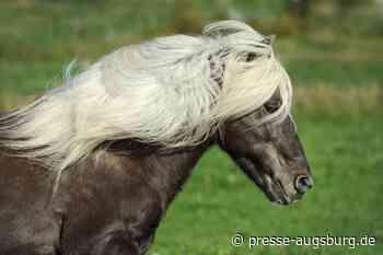Durch Drohne aufgeschreckt | Pferd auf Weide bei Altenmünster verletzt