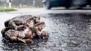 Vorsicht: Frühjahrswanderung der Amphibien beginnt