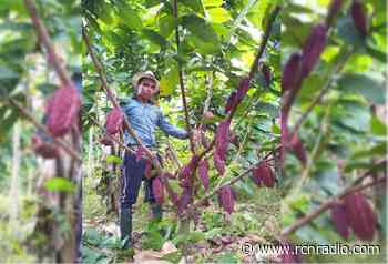 Exquisitez del cacao de San Vicente de Chucurí llega otra vez a París - RCN Radio