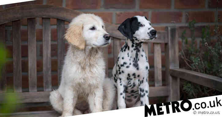 Scientifically speaking, these are the cutest dog breeds in the world