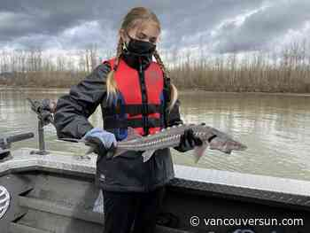 Fraser fish finders: Chilliwack school kids join in sturgeon data-collection effort