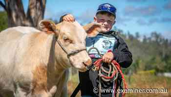 Junior Beef Expo at Deloraine gets kids off the couch and into the paddocks - Tasmania Examiner