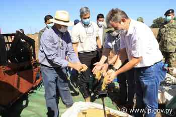 Mandatario compartió con productores de Naranjal y encabezó inicio de cosecha de soja en Puerto Barra   - ip.gov.py